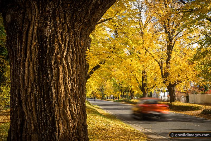 Autumn in Bright