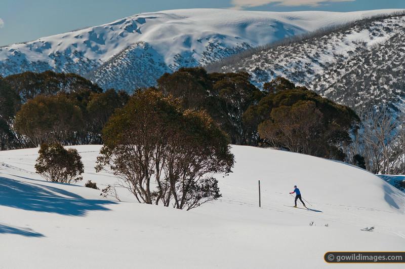 Cross-country trails near Rocky Valley Reservoir, Falls Ck. Spion Kopje in the distance