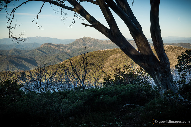 View of Mt Buffalo (L) and Mt Cobbler (R) from Stirling Trail, Mt Stirling