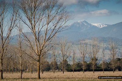Mt Buller from Piries, near Jamieson. The ski runs to the right are on Little Buller Spur. Snow depth is around 30cm.