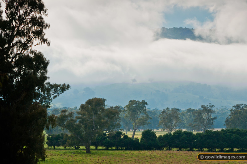 Unusual midday cloud hovers over the foothills above the Yea River, near Killingworth.