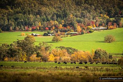 Autumn rural scene near Mount Beauty