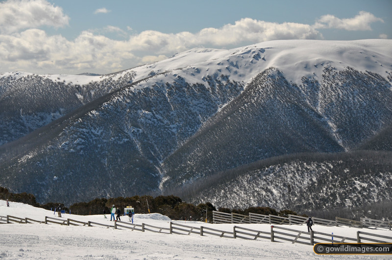 'Wombat's Ramble' run at Falls Creek, spring skiing.