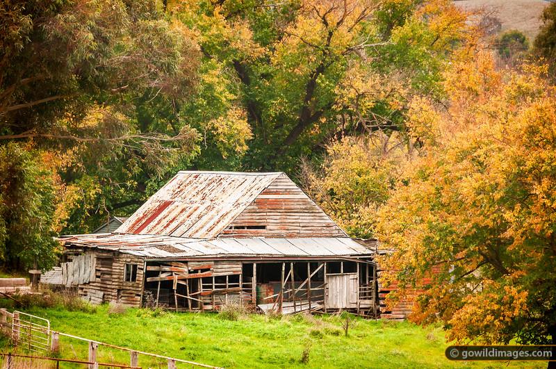 Abandoned farm hut near Yea, along the Melba Highway.