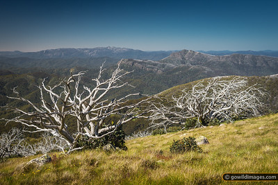 Summer view of Mt Buffalo (L) and Mt Cobbler (R) from Mt Stirling summit 1745m.