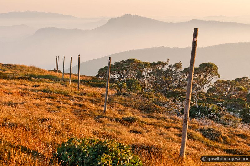 Early morning light on alpine snow poles, Mt Stirling. Mt Buffalo (L) and Mt Cobbler (R) are in the distance, with smoke from a nearby bushfire filling the valleys below around 1000m