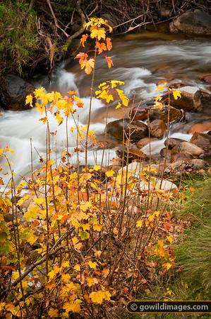 Autumn trees by the Delatite River near Mt Buller