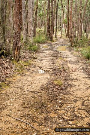 Creswick Tracks