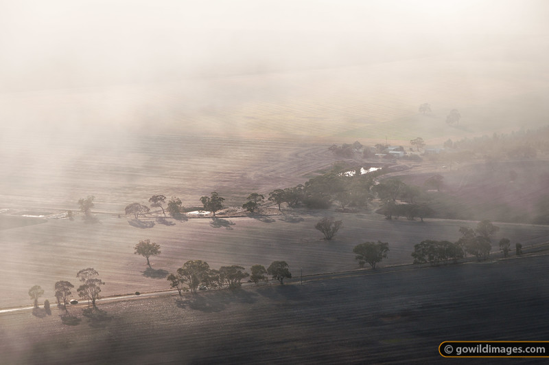 Misty Plains