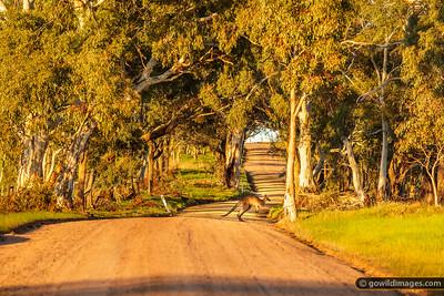 Roo Road
