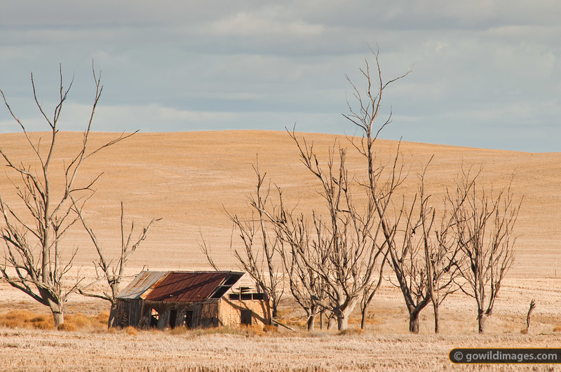 Another picturesque, deserted farmhouse north of Nhill in the mallee region of NW Victoria.