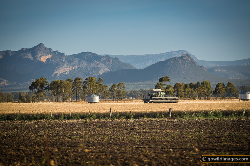 Summer wheat harvest in full swing, Northern Grampians