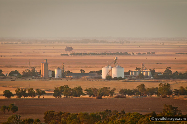 Mitiamo wheat silos, early morning, from Mt Terrick Terrick, Terrick Terrick NP