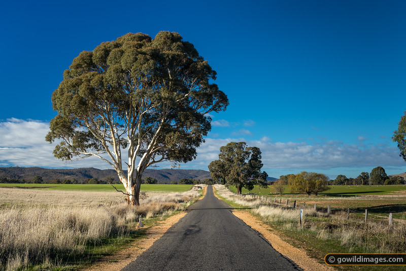 Picturesque country road near Rostron, on the edge of Kara Kara National Park (formerly St Arnaud Range NP)