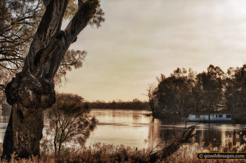 A house boat moored on the Murray River near Mildura in late afternoon light. Framed by a River Red Gum.