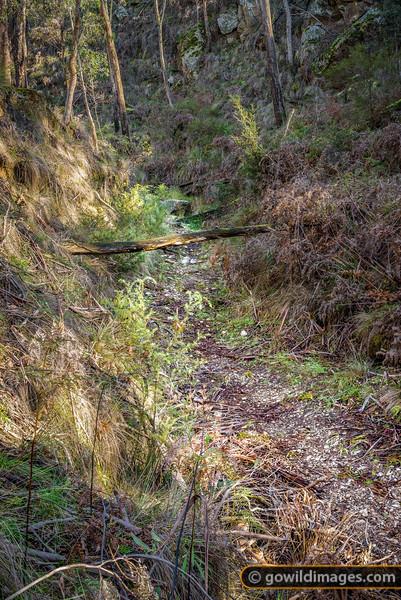 Misery Creek