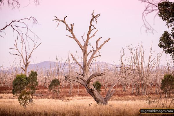 Winton Drylands