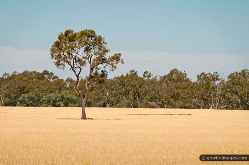 Farmland adjoining Terrick Terrick NP