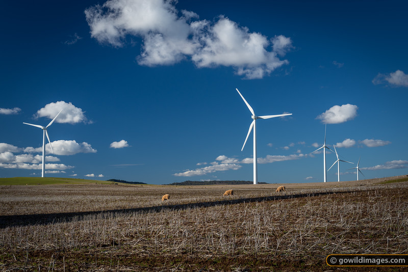 Wind farm near Waubra