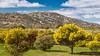 Mount Korong