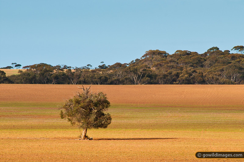 Along the mallee highway, near Underbool, NW Victoria