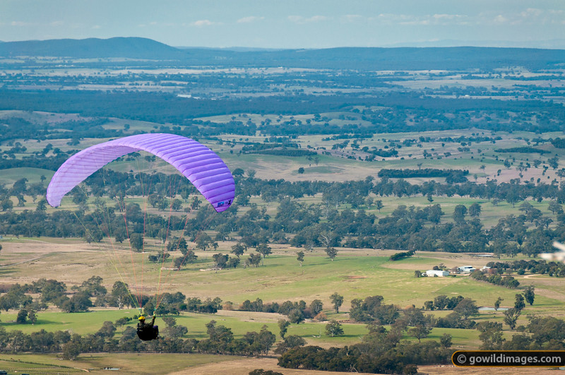 A paraglider soars on the updraft of the eastern slopes of Mt Alexander, enjoying the view over Sutton Grange.