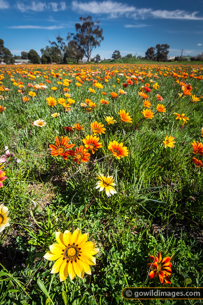 Roadside wildflowers on the outskirts of Lockington township