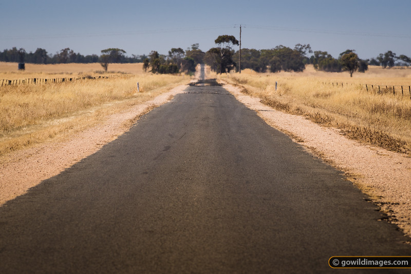 Wheat fields, Kiata South Rd, Kiata