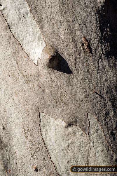 Gum Detail