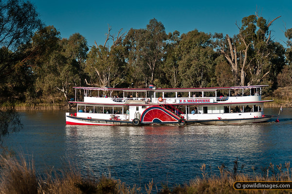 The steam-driven paddle boat, PS Melbourne on the Murray River in Mildura.