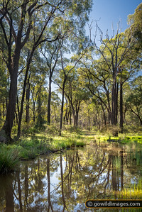 Flood Forest
