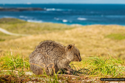 Quokka Views