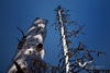 """April 2011. Dead trees on the Feichtau-Alm. There the hikers experience the so-called """"way to the wilderness"""" where old trees are not chopped. You can imagine that there are a lot of woodpeckers around."""
