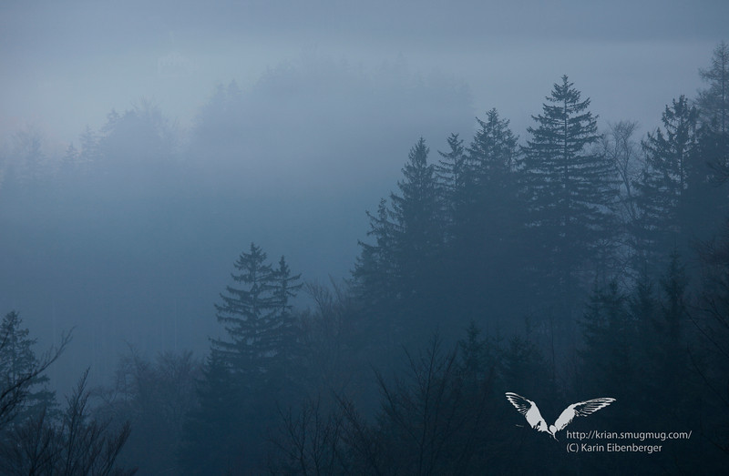 April 2011. Misty morning on a hike to the Oberer See/Lunz.