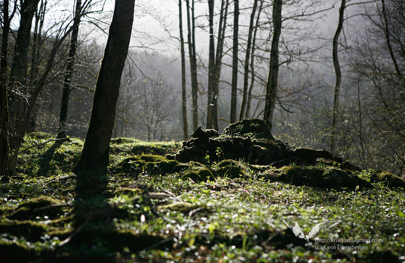 April 2011. A misty morning near Lunz, on the way to the Oberer See.