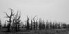 spooky trees-6920