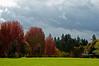 fall colors 2012_DSC0276