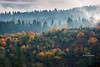 foggy autumn hillside -6063