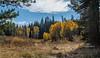 autumn trees tahoe-5129