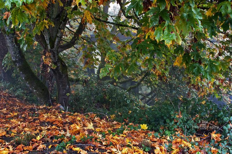 foggy fall morn DSC_0060