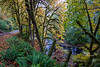 nehalem river autumn-4213