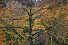 fall colors redo DSC_0147