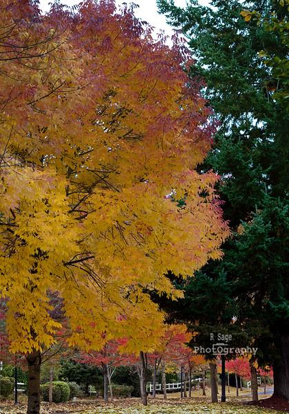 sherwood colors Panorama1