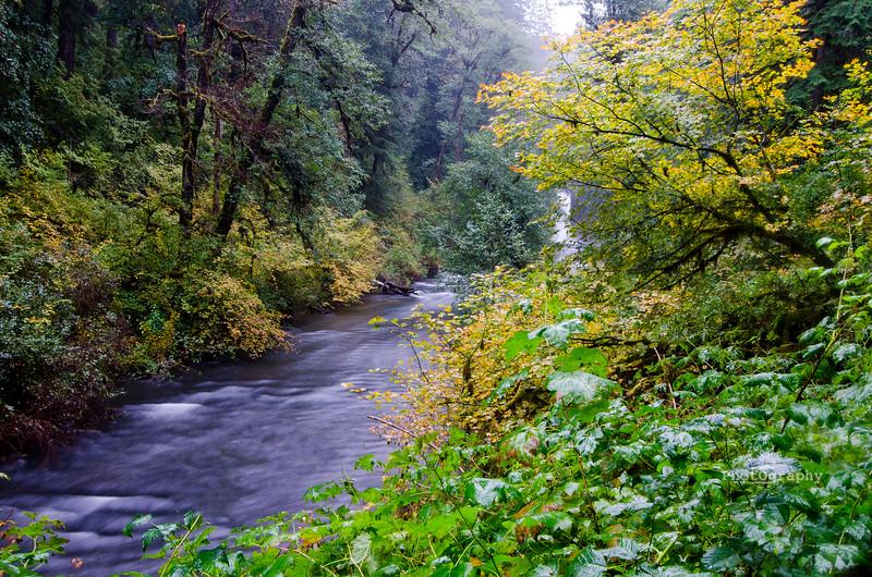 silver fall fall DSC_6380