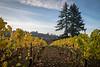 newberg vineyards-2491