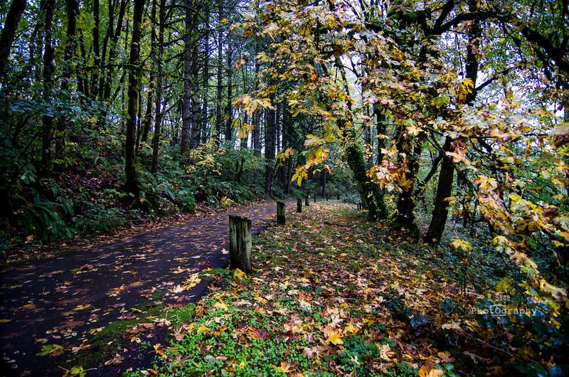 fall road-7282