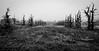 spooky trees 2 b&w-6931