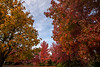 fall color-2567