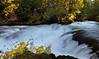 mckenzie river--5869