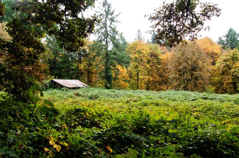 fall field DSC_6593